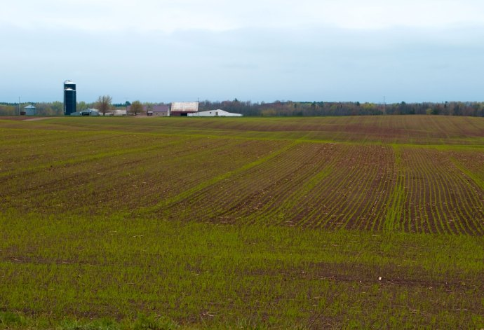 A view across a farm field, with farm buildings in the distance, bordered by a just-leafing-out forest. The crop is just starting to sprout in waving rows--a hint of green above the wet brown earth.